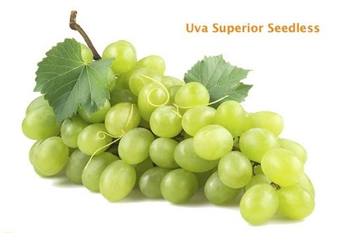 ORGANIC WHITE GRAPE